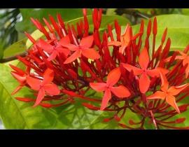 kwiatek na wyspie Mahe