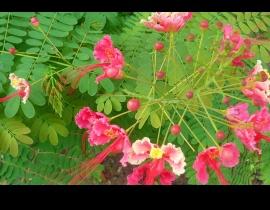 kwiatek na wyspie Mahe 2